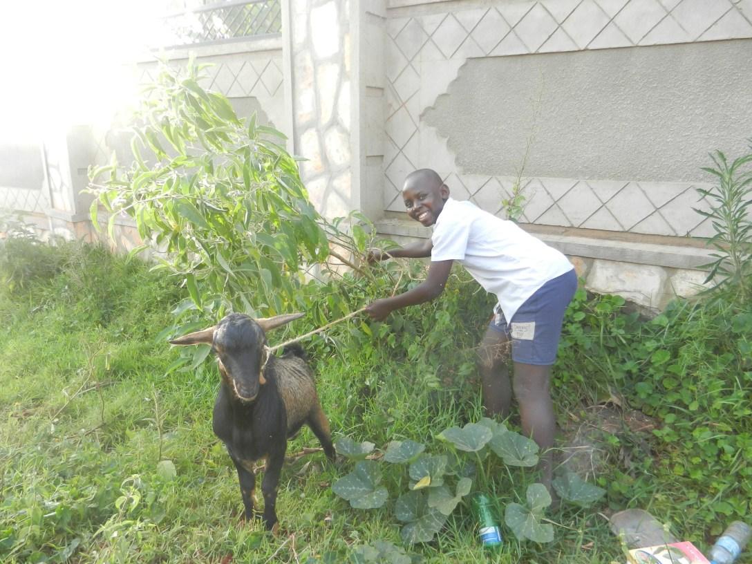 goats 266-1