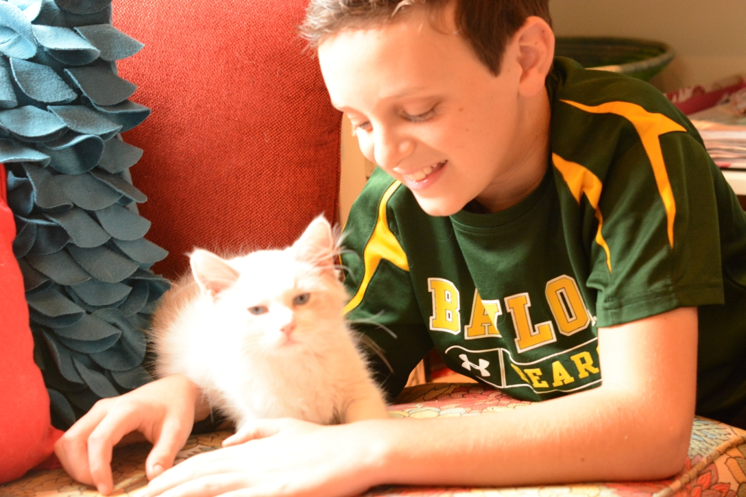 jack takes study breaks with our new kitten Fritz