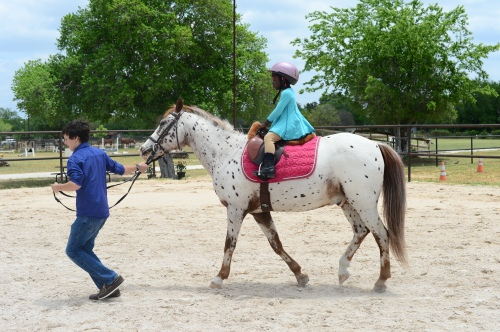 future equestrian