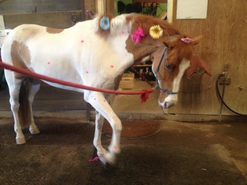 Biggie was dressed up for Kira's fourth birthday.