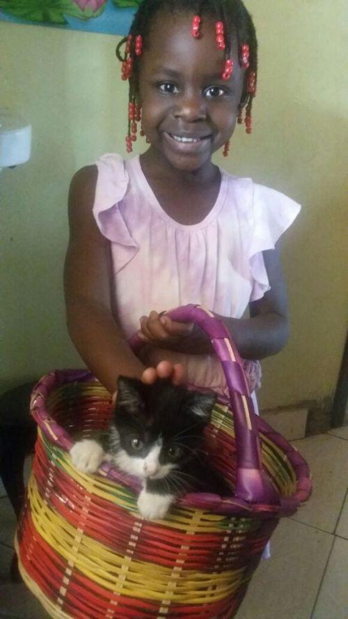 kira loves the new kitten at the house