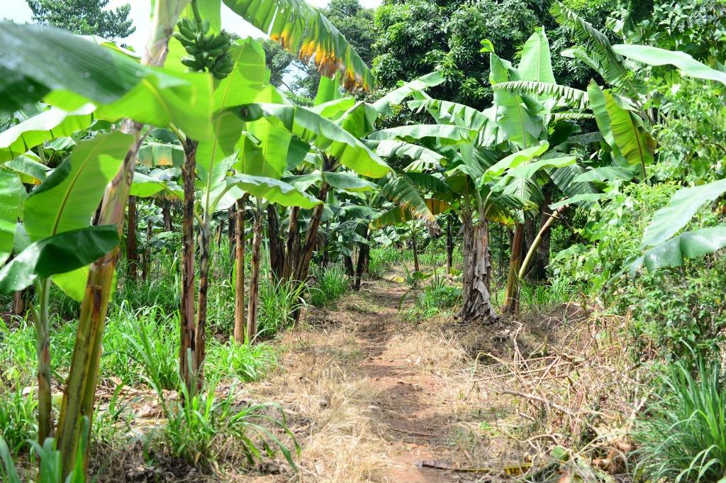 path through the garden
